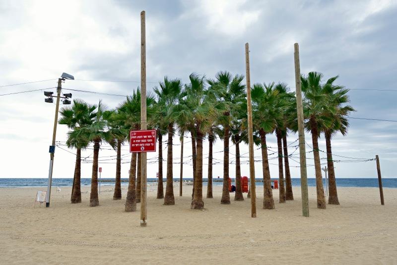 palmen